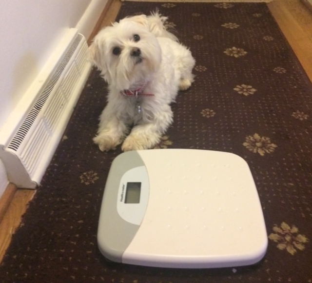 cute photo of dog and scale